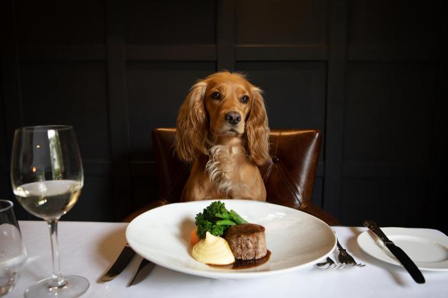 Dogs can dine alongside their owners at Rothay Manor Hotel in Ambleside