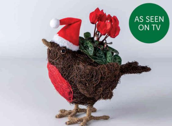 The Oldham Times: Sisal Robin Planter with Cyclamen. Picture: Lidl