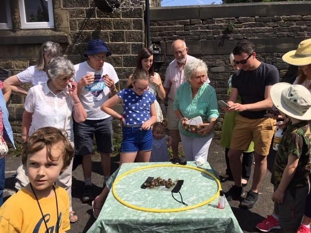 Punters try their hand at snail racing